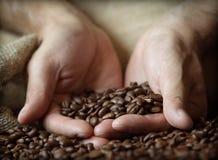 Feijões de café da terra arrendada da mão Fotografia de Stock