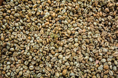 Feijões de café de Luwak Imagem de Stock