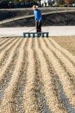 Feijões de café de secagem Fotografia de Stock Royalty Free