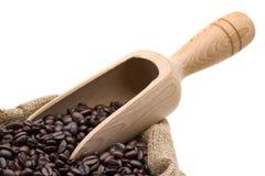 Feijões de café do teste fotos de stock