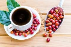 Feijões de café maduros vermelhos Fotografia de Stock