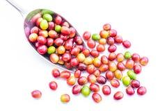 Feijões de café maduros vermelhos Fotografia de Stock Royalty Free