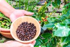 Feijões de café na bacia de madeira Foto de Stock