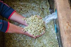 Feijões de café nas mãos Imagens de Stock