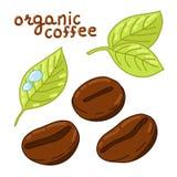 Feijões de café orgânicos ilustração royalty free