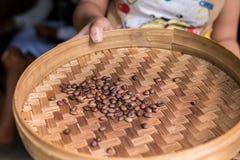 Feijões de café orgânicos Roasted da goma-arábica Ilha exótica tropical de Bali, Indonésia Café autêntico de bali em um café Foto de Stock Royalty Free