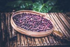 Feijões de café orgânicos Unroasted da goma-arábica Ilha exótica tropical de Bali, Indonésia Café autêntico de bali em um café Foto de Stock