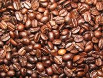 Feijões de café recentemente roasted fotografia de stock