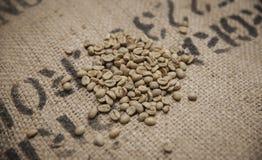 Feijões de café verdes Foto de Stock Royalty Free