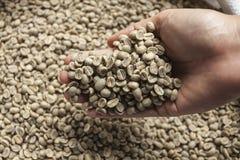 Feijões de café verdes Fotografia de Stock