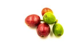 Feijões de café vermelhos maduros frescos em um fundo branco Imagem de Stock
