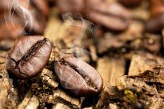 Feijões de café - feijões de voo do fundo do detalhe da pilha das grões foto de stock