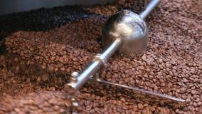 Feijões de mistura do café após o assado vídeos de arquivo