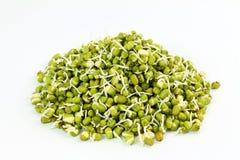 Feijões de mung brotados frescos ou feijões do grama verde no fundo branco Fotos de Stock