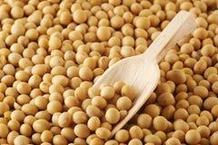 Feijões de soja Foto de Stock