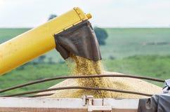 Feijões de soja de derramamento no caminhão Foto de Stock Royalty Free