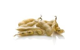 Feijões de soja nos escudos isolados Imagens de Stock