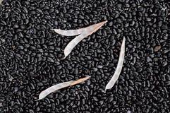 Feijões pretos Imagem de Stock Royalty Free