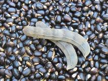 Feijões pretos da soja Foto de Stock Royalty Free