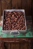 Feijões Roasted do chocolate do cacau no alumínio de molde pesado roa do vintage Fotos de Stock