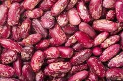 Feijões-roxos Foto de Stock