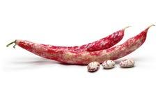Feijões-roxos vermelhos Imagem de Stock