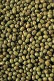 Feijões verdes do azuki (radiata do Vigna). Fotos de Stock Royalty Free