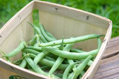 Feijões verdes na cesta Fotos de Stock Royalty Free