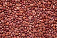 feijões vermelhos Foto de Stock Royalty Free