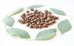 Feij?es de caf? com folhas do eucalipto imagem de stock