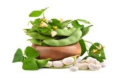 Feijões da soja com folhas Imagens de Stock