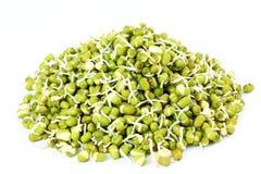 Feijões de mung brotados frescos ou feijões do grama verde no fundo branco Imagem de Stock