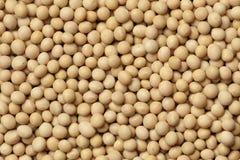 Feijões de soja secados Imagem de Stock Royalty Free
