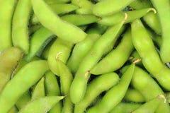 Feijão verde da soja Foto de Stock
