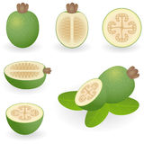 Feijoa Stock Photos