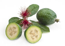 Feijoa with flowers Stock Images