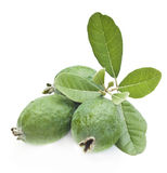Feijoa friut. Fresh New Zealand feijoa fruit with leaves isolated on white royalty free stock photos