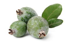 Feijoa and leaves. Feijoa and leaves isolated over white Stock Photos
