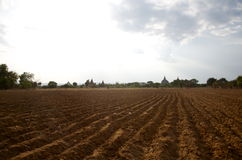 Feild in bagan on a bluebird day Royalty Free Stock Photo
