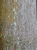 Fein strukturiertes Baumrinde-Muster stockbilder