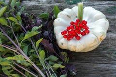 Feine Ernte des Gemüses von Ihrem eigenen Garten stockfoto