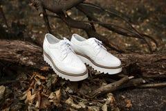 Feine modische ` s Frauen des weißen Leders Broguesschuhe auf dem alten Holz und dem Herbstlaub in einem Wald oder in einem Park Lizenzfreie Stockbilder
