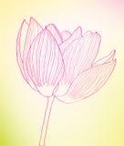 Feine rosafarbene abstrakte Blume gegen. Stockfotografie