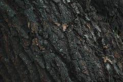 Feiner Barkenbeschaffenheitshintergrund Stockfoto