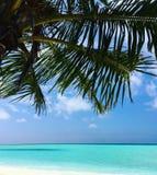 Feiner weißer Sand, Palmen und Türkiswasser Stockfotos