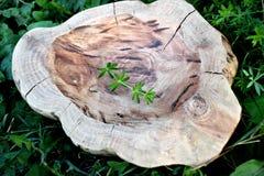 Feito a mão, carpintaria, textura e materiais, pratos e utensílios naturais do agregado familiar da madeira, imagem de stock