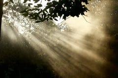 Feixe de luz e de névoa Imagens de Stock