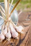 Feixe do alho de encontro à cubeta na madeira Fotos de Stock Royalty Free