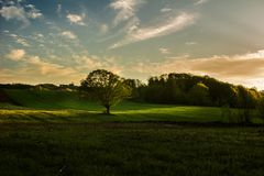 Feixe luminoso sobre a árvore no vale foto de stock royalty free