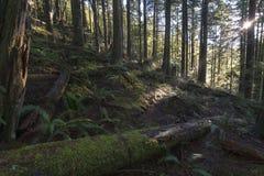 Feixes de madeira fotos de stock royalty free